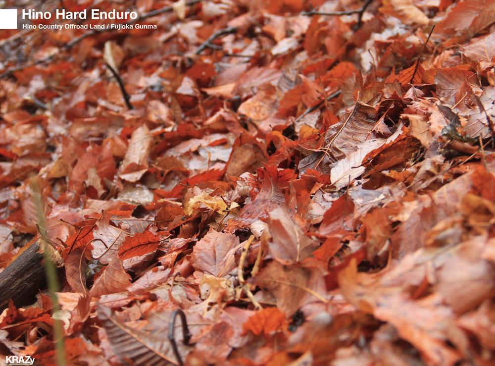 落ち葉濡れた地面