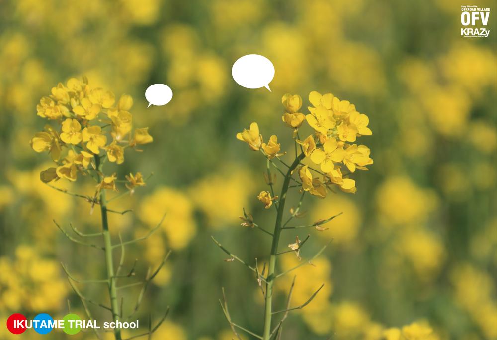 菜の花の春