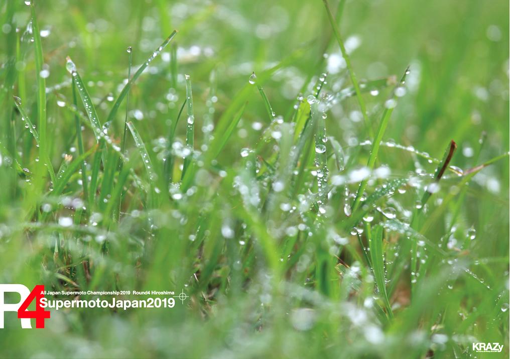 雨つゆの草