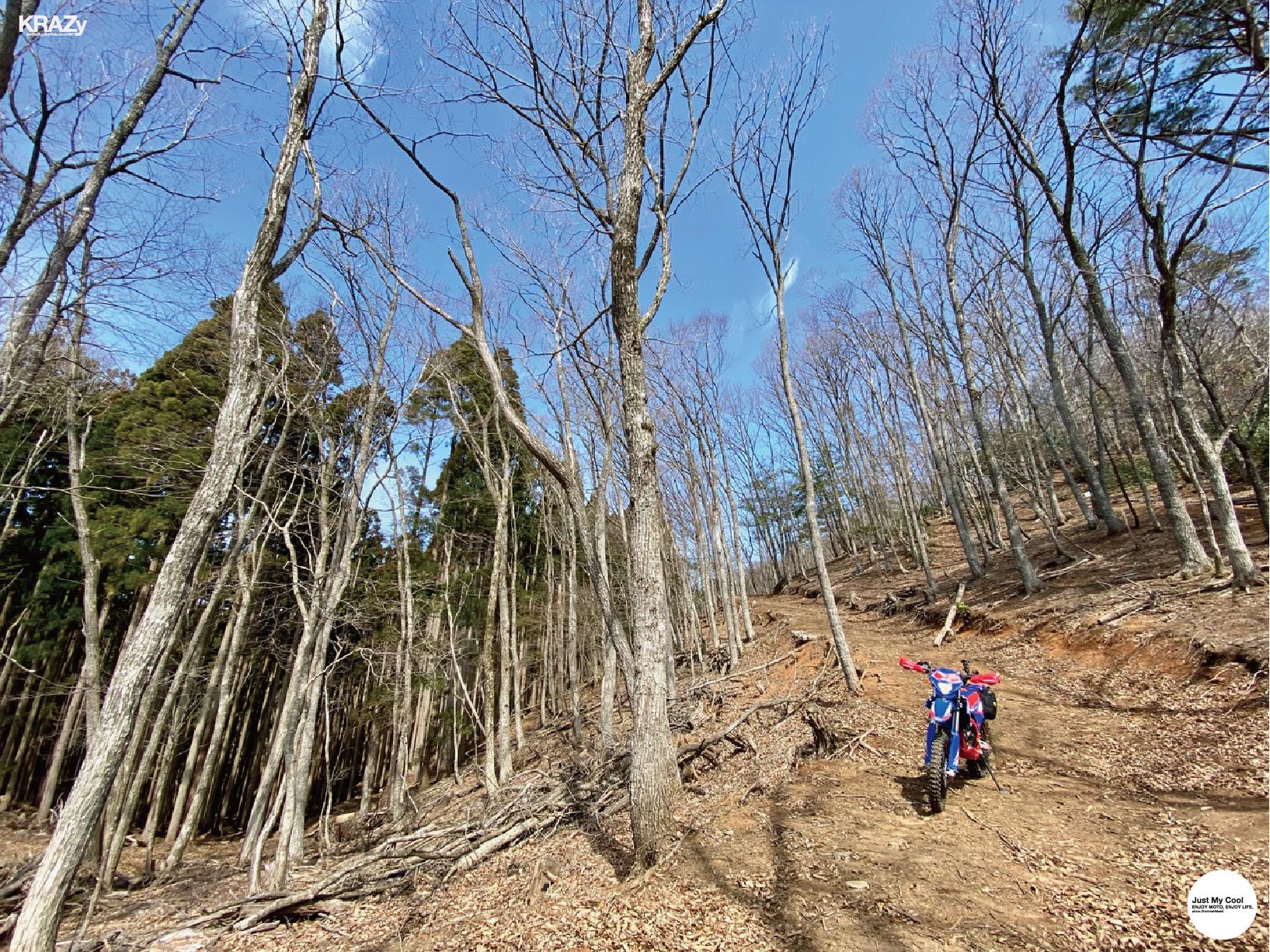6枯れ木立林道- Apr